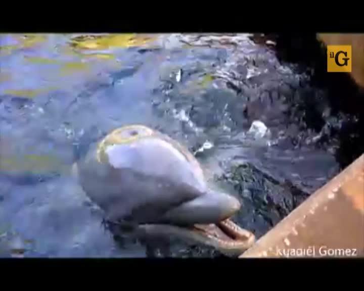 Delfino dispettoso scippa l'iPad ad una turista