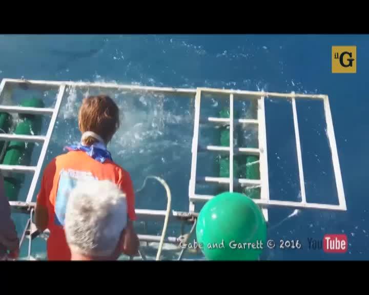 Squalo bianco entra nella gabbia protettiva in cui si nasconde un sub