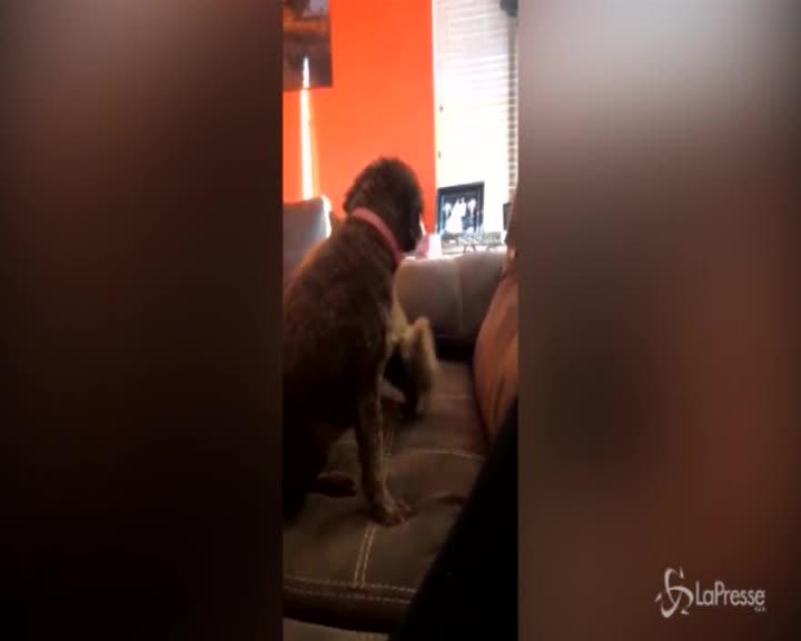 Carezze e abbracci tra cane e gatto