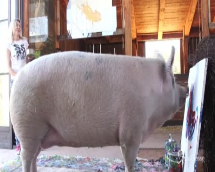"""Sudafrica, il maialino pittore dipinge opere d'arte su tela: è """"Pigcasso"""""""