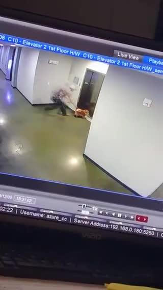 Le porte dell'ascensore si chiudono e il guinzaglio resta bloccato: cane rischia decapitazione